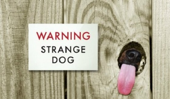 Strange Dog