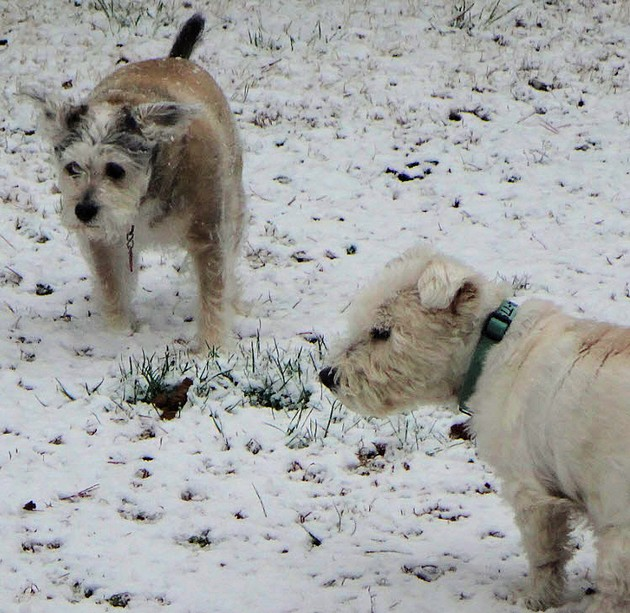 Dogs in spring snow2