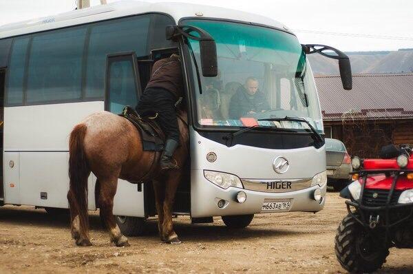 horse-bus