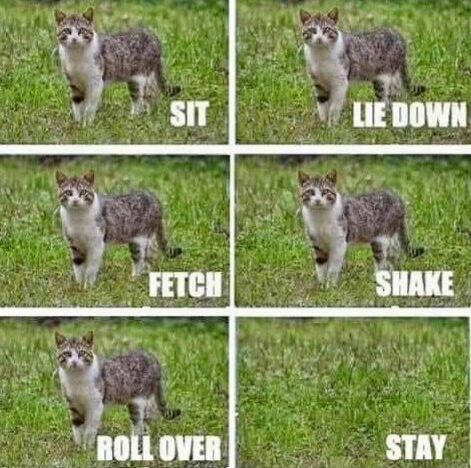[Image: Cat-Tricks.jpg?w=960]