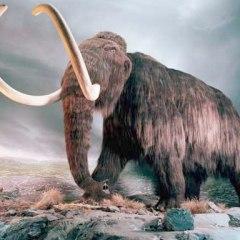 Científicos anuncian que clonarán un mamut