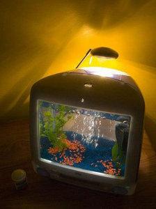 tv-mania-aquario.jpg