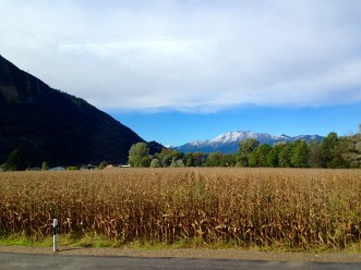 One of the many crop fields we drove by