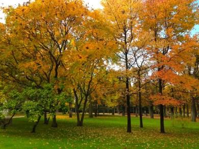 Amazing trees in Jardin du Luxembourg