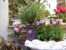 Lavendelschneck