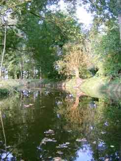 Uferweidenbach