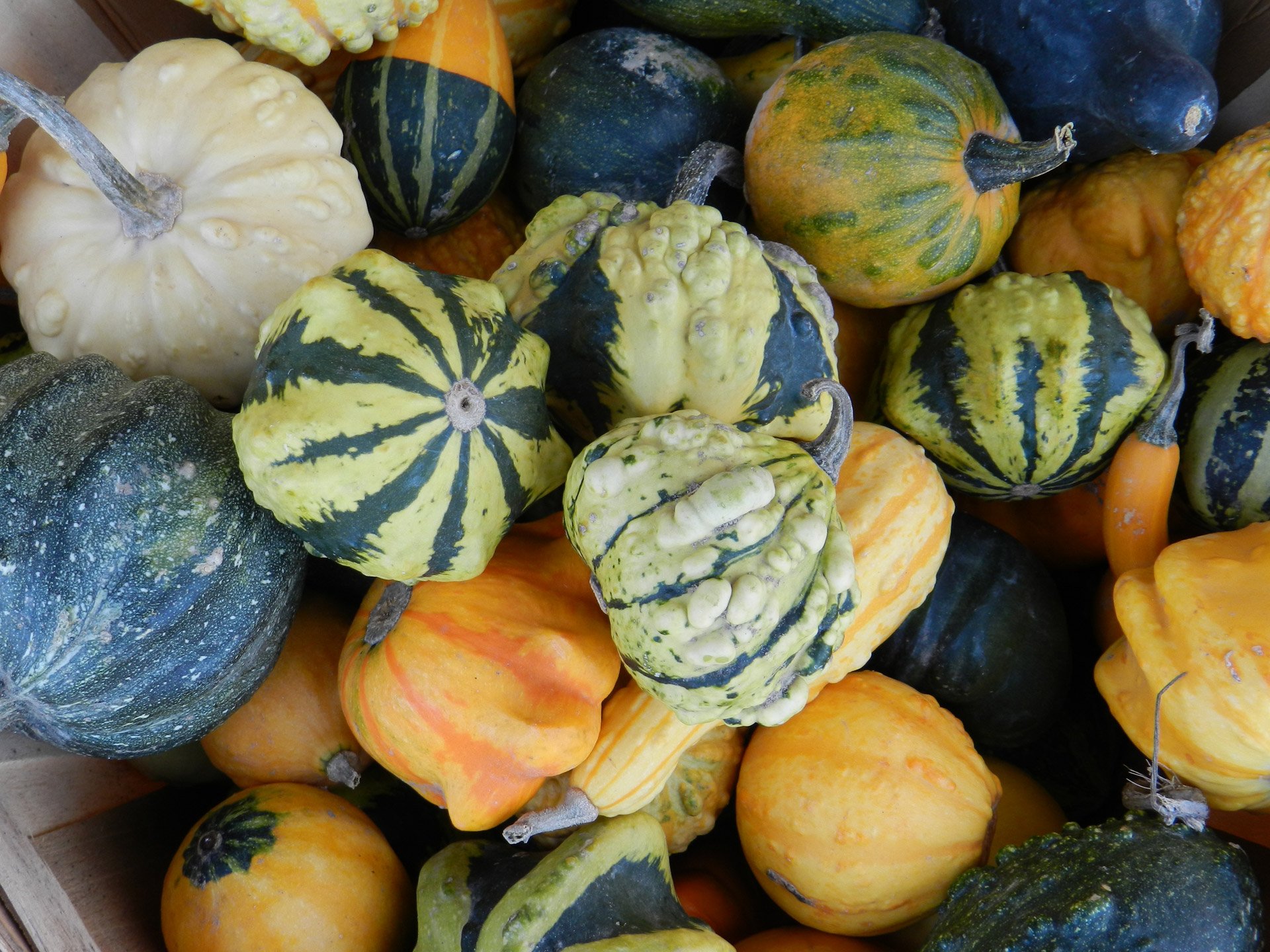 Cultivate Oxford mixed squashes