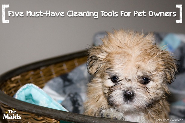 Five-Must-Have-Cleaning-Tools-For-Pet-Owners1