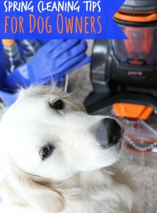 Spring Cleaning Tips for Dog Owners