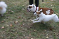 Uptown Dog Park