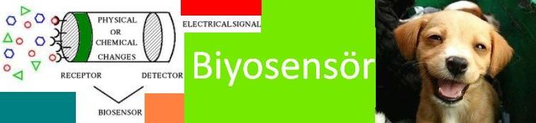 Biyosensor