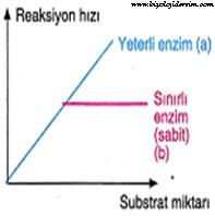 enzim substrat ilişkisi