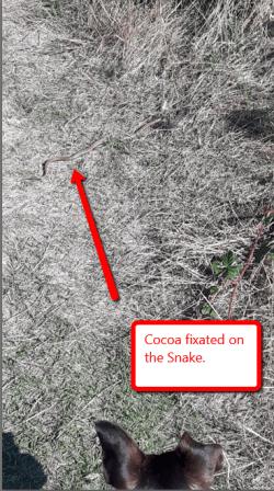 cocoa_snake