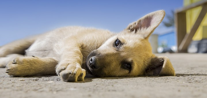 In a Slump? 11 Tips to Succeed in the Dog Days of Summer