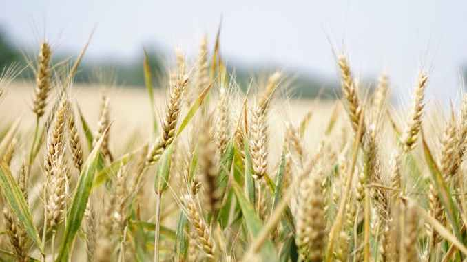 Business ideas in Agriculture