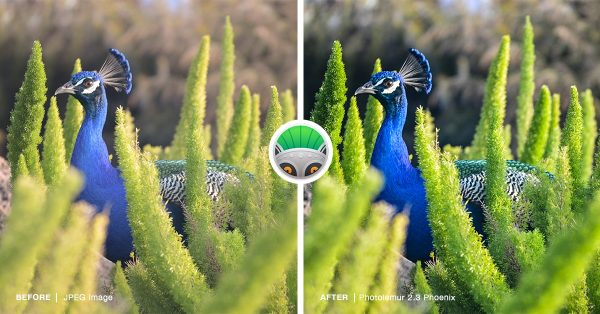 PhotoLemur - peacock