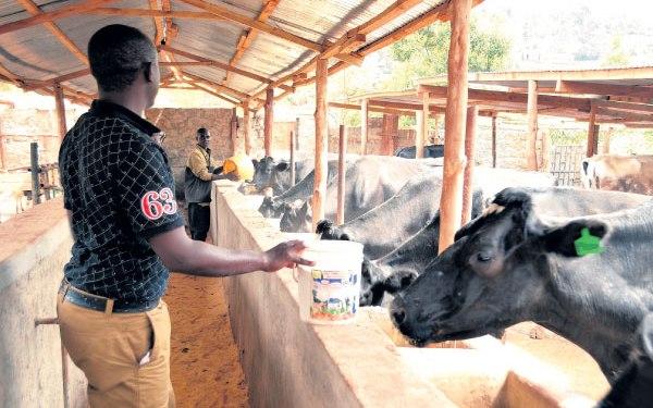 Top Dairy Farms in Kenya