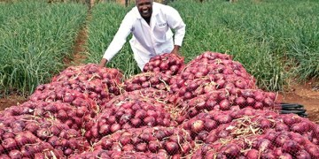 Onions Price Per Kg