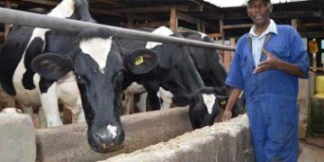 Profitable dairy farming in Kenya