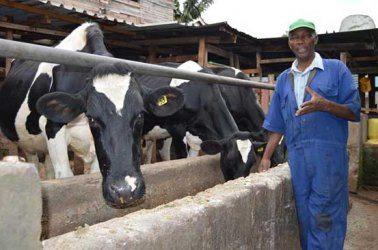 Profitable dairy farming in Kenya