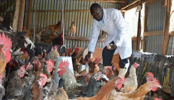 Most Profitable Chicken Breeds