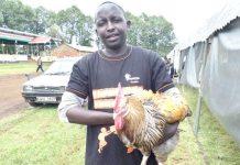 Poultry Kenya
