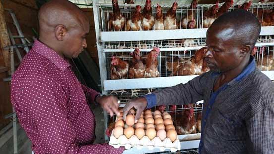 Eggs Wholesalers in Nairobi