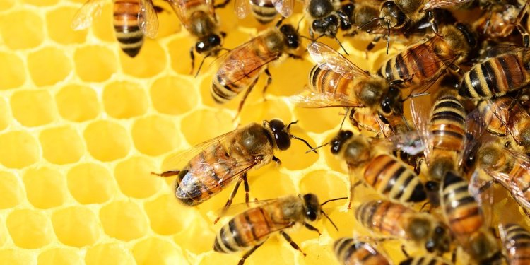 21 must-have equipment for profitable beekeeping - Bizna Kenya