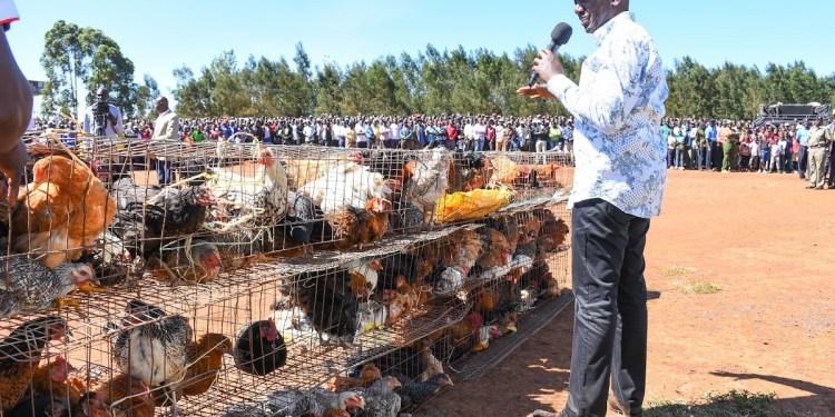 DP Ruto Chicken Farm