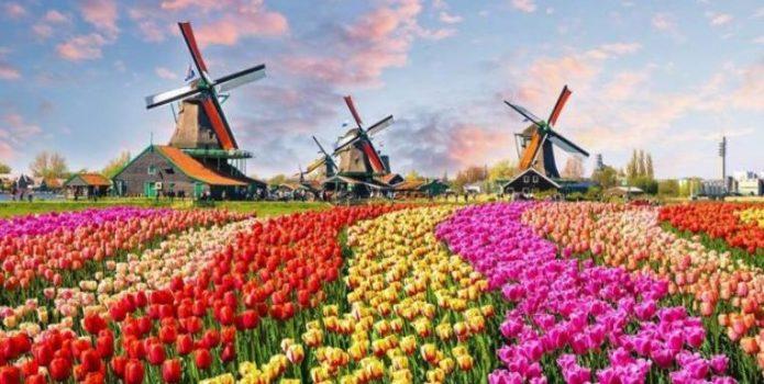 """Tulipanët """"rrëmbejnë"""" mbi 1 mln turistë në Holandë – Parashikimi: Pritet të shpenzojnë rreth 300 mln euro"""