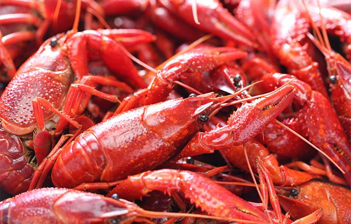 Pinch A Palooza Festival & Crawfish Eating Contest