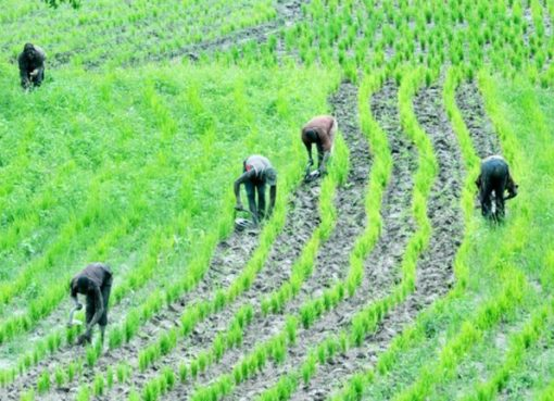 FG's Agricultural Programme To Reduce Poverty, Create Employment