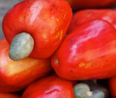Cashew Export Sees Significant Rise Due To Awareness Of Potentials - LCFE Boss