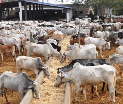 Transaction Value Of Cattle In Lagos Alone Is N328bn