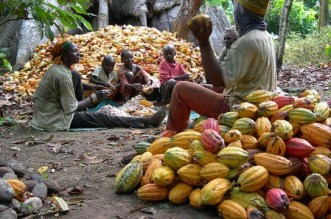 Nigeria Dominates Cocoa Exporting Countries