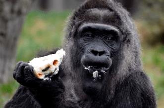 Gorilla Swallows N6.8 million