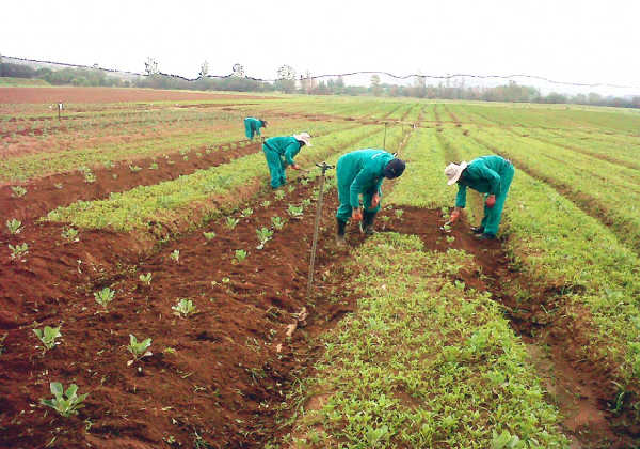 The Kaduna State Chapter Of All Farmers Association Of Nigeria (afan), Has Appealed For Timely Provision Of Farming Inputs To Wet Season Farmers To Improve Food Security In The State. Afan's Chair