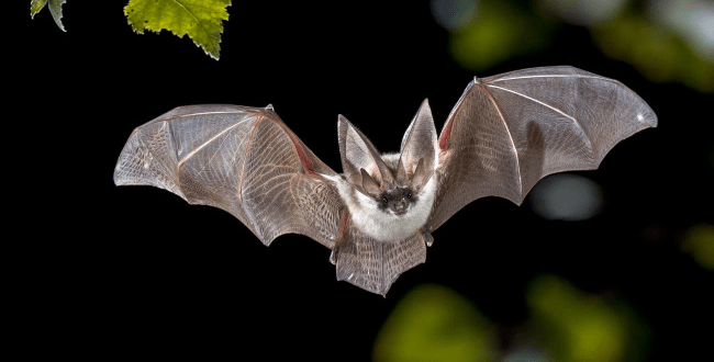 COVID 19 Originated from Bats