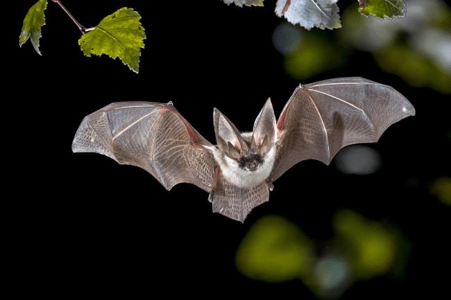COVID 19 Originated from Bats