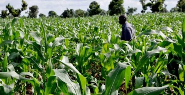 Nigerian Farmers
