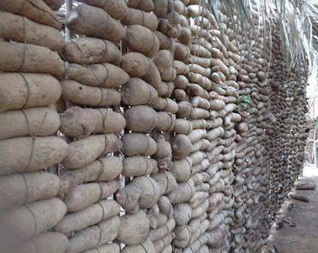 FG targets increased yam export, unveils storage facility