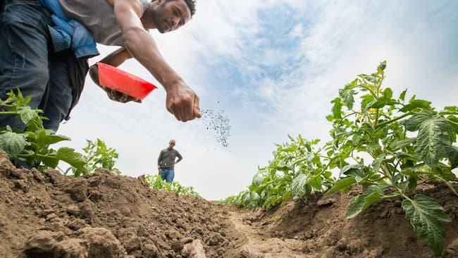 Low-Quality Fertiliser Infiltrates Market, Group Seeks FG's Support