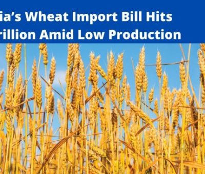 ANALYSIS: Nigeria's Wheat Import Bill Hits N1.05 trillion Amid Low Production