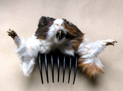 taxidermy-accessories-10