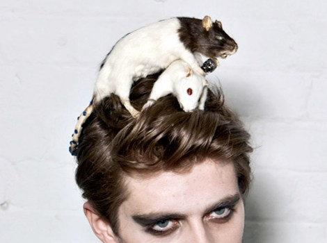 taxidermy-accessories-4