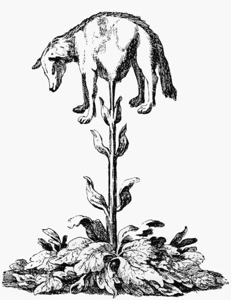Vegetable_lamb_(Lee,_1887)