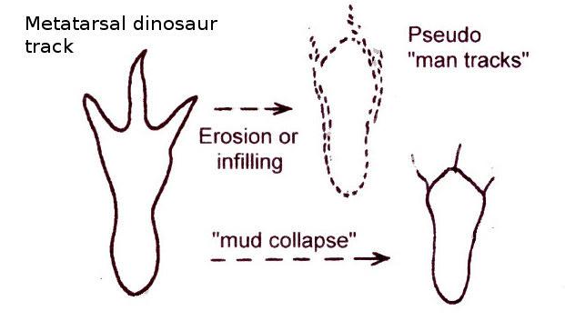 metatarsal-track-diagram3