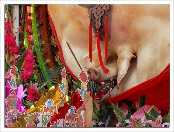 pigs-of-god-festival2-550x418