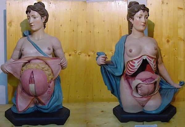 anatomicalvenus7padmfladm