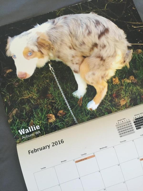 pooping-dogs-calendar-2016-9709